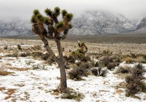 Winter+Storm+Hits+Las+Vegas+O98bPv5Y-Xel