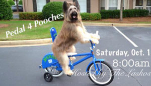 Charities - Pedal4Pooches
